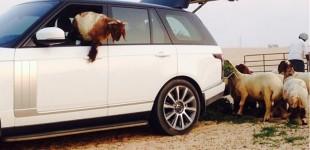 """""""بالفيديو والصور"""" سعودي مالك رنج روفر 2014 قد يواجه قضية بسبب تحويل السيارة بيتاً للأغنام"""