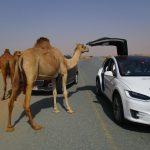 """""""بالصور"""" نظرة على 8 من أغرب قوانين المرور حول العالم"""